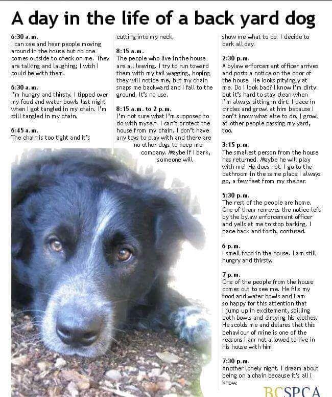 Backyard Dogs Dogs Animals Stop Animal Cruelty