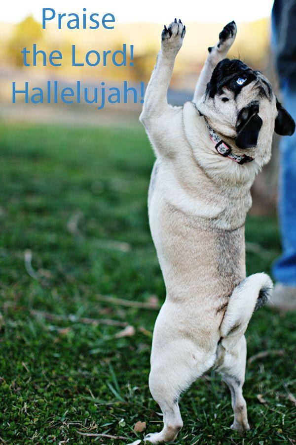 My Pug Obsession Pug Pugs Puppies Dog Thaifernandes