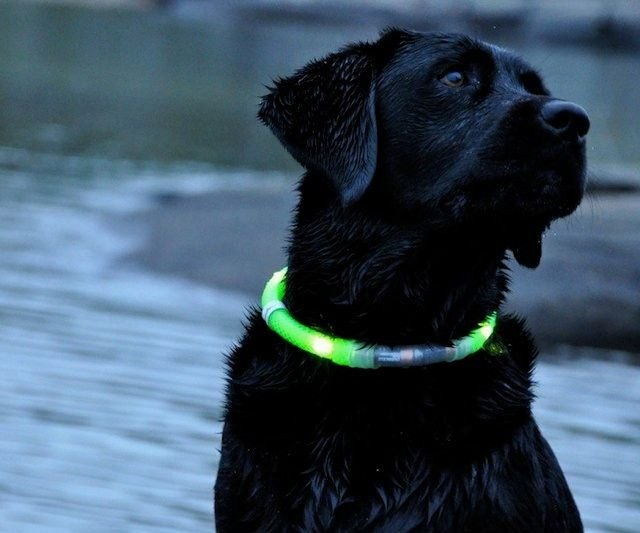 Glow In The Dark Dog Collar Led Dog Collar Dog Leads Dogs