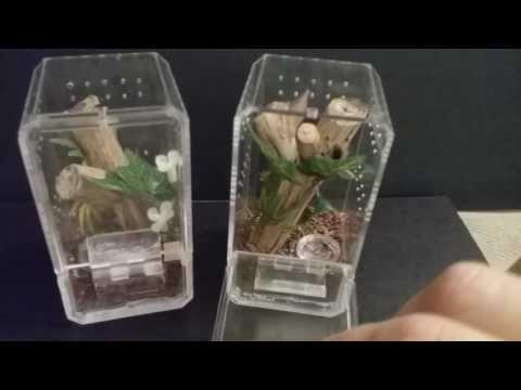 Arboreal Sling Enclosures Hobby Lobby Display Cases Youtube Tarantula Enclosure Pet Tarantula Pet Spider