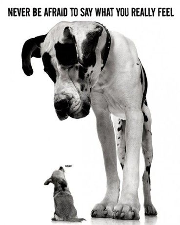 Never Be Afraid To Say What You Really Feel Poster Baby Dogs