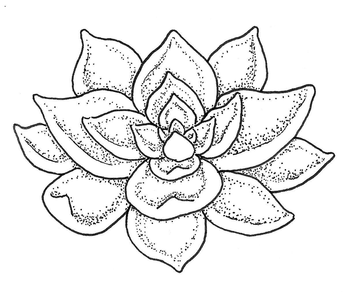 Pin Van Carmen Elena Op Cactussen En Succulents Kleurboek Waterverf Creatief