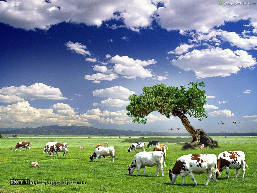Cow Desktop Wallpaper Wallpaper Animals Family Of Earth Cow