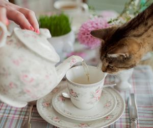 Tea Time...                              @kendrasmiles4u