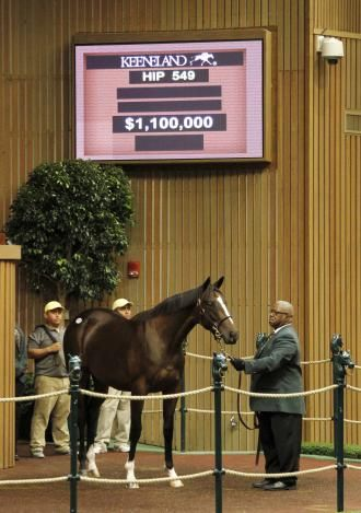 Keeneland September: Tiznow filly sells for $1.1 million | Daily Racing Form, Tiznow is a sire of sires and a great broodmare sire!