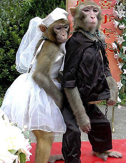 Monkey Wedding Cake Topper Monkeys Handmade by by TheHappyAcorn