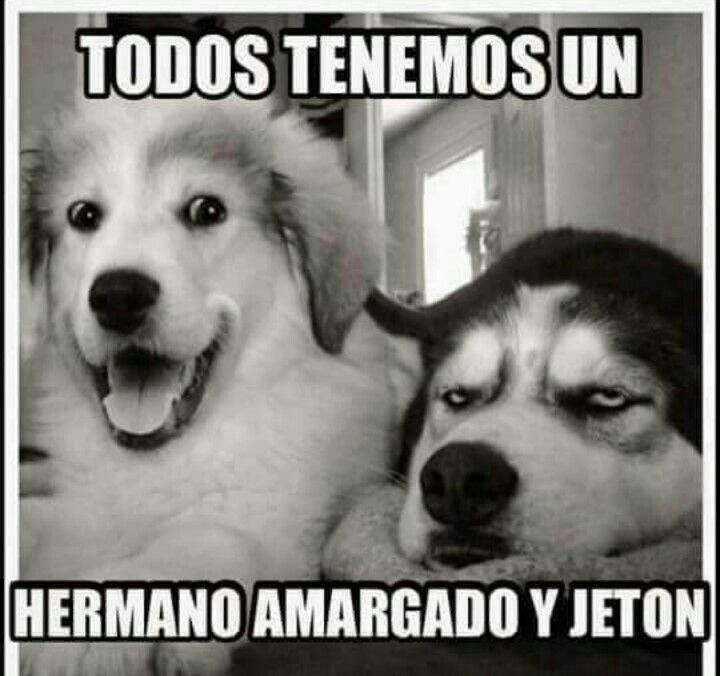 Hermanos Grupos De Whats Bad Pun Dog Funny Dogs Y Dog Memes