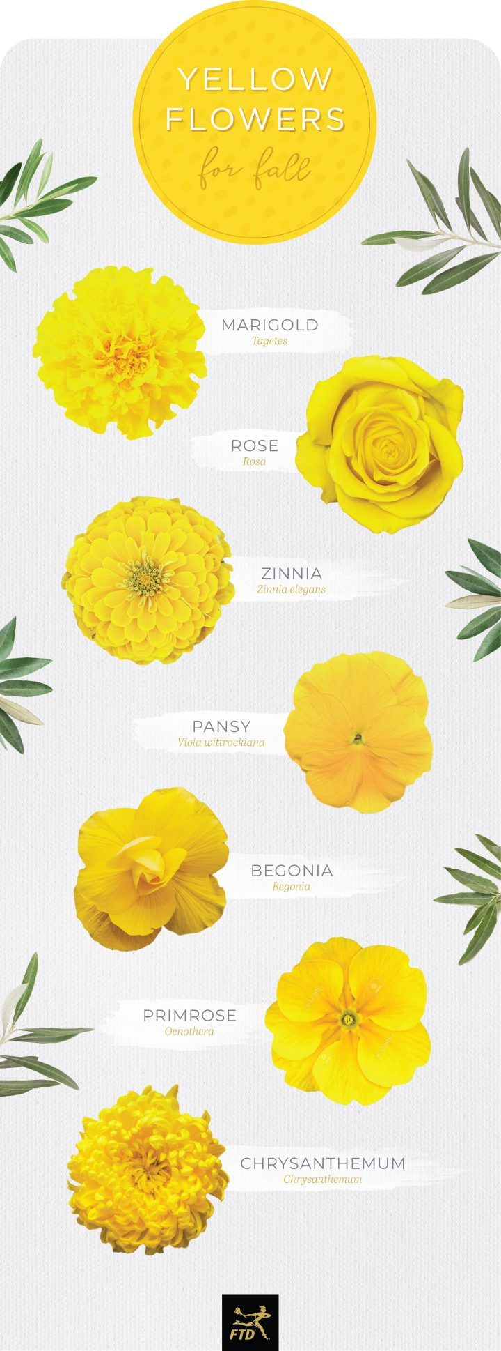30 Types Of Yellow Flowers Ftd Com Yellow Flowers Names Types Of Flowers Yellow Wedding Flowers