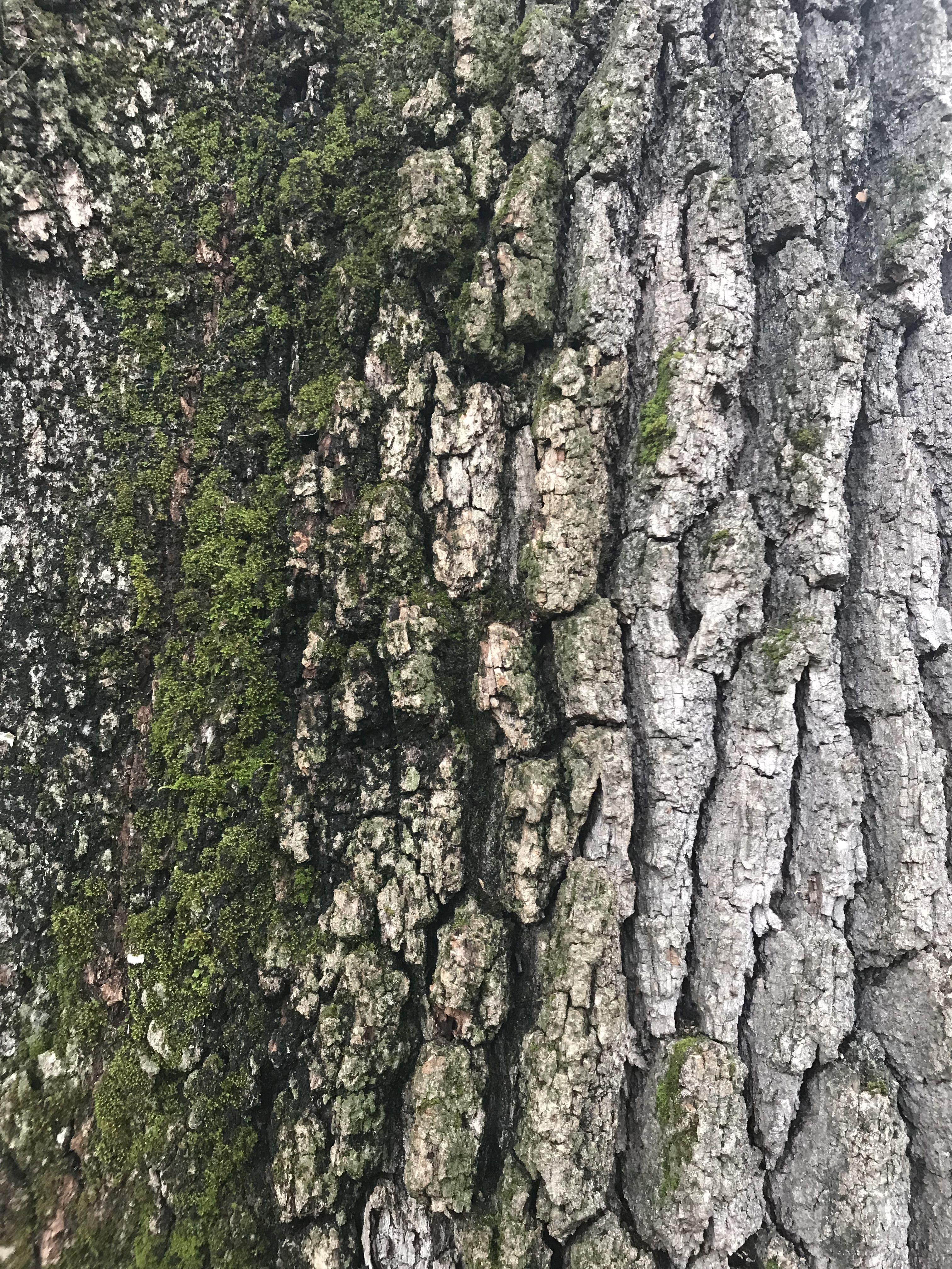 Tree Bark Texture Tree Bark Texture Tree Textures Tree Bark