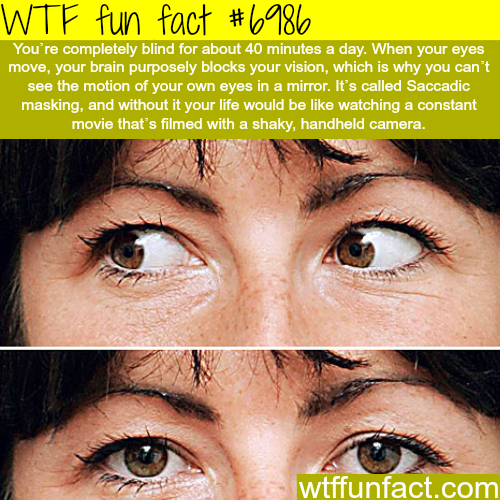 Science Facts Brain: How Your Brain Plays Tricks On You - WTF Fun Fact