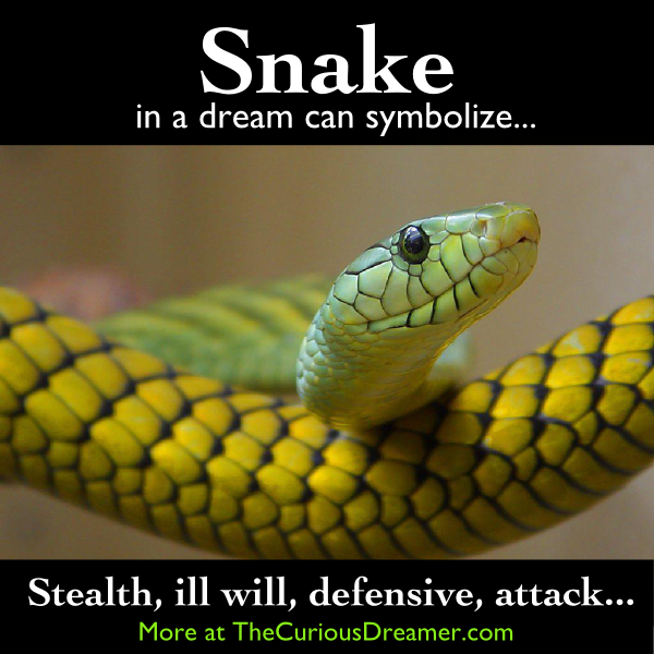 A Snake In A Dream Can Symbolize More At Thecuriousdreamer