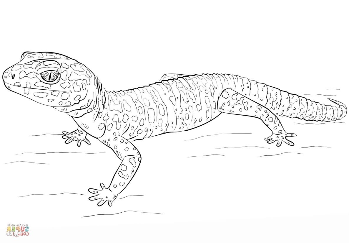Gecko Coloring Pages Xflt Leopard Gecko Coloring Page Free