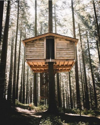 Diseno Casa Bosque: DIY Tree House Ideas & How To Build A Treehouse (For Your