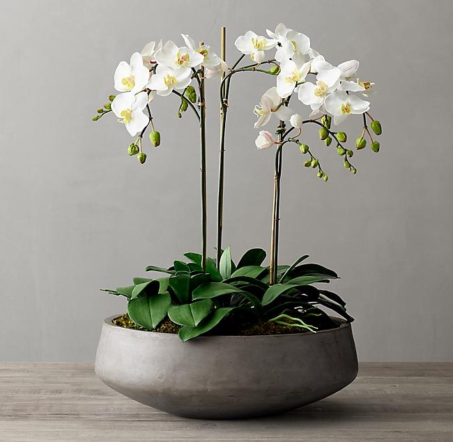 Faux Orchid Plant Cast Concrete Bowl Large Indoor Orchids Orchid Plants Bathroom Flowers
