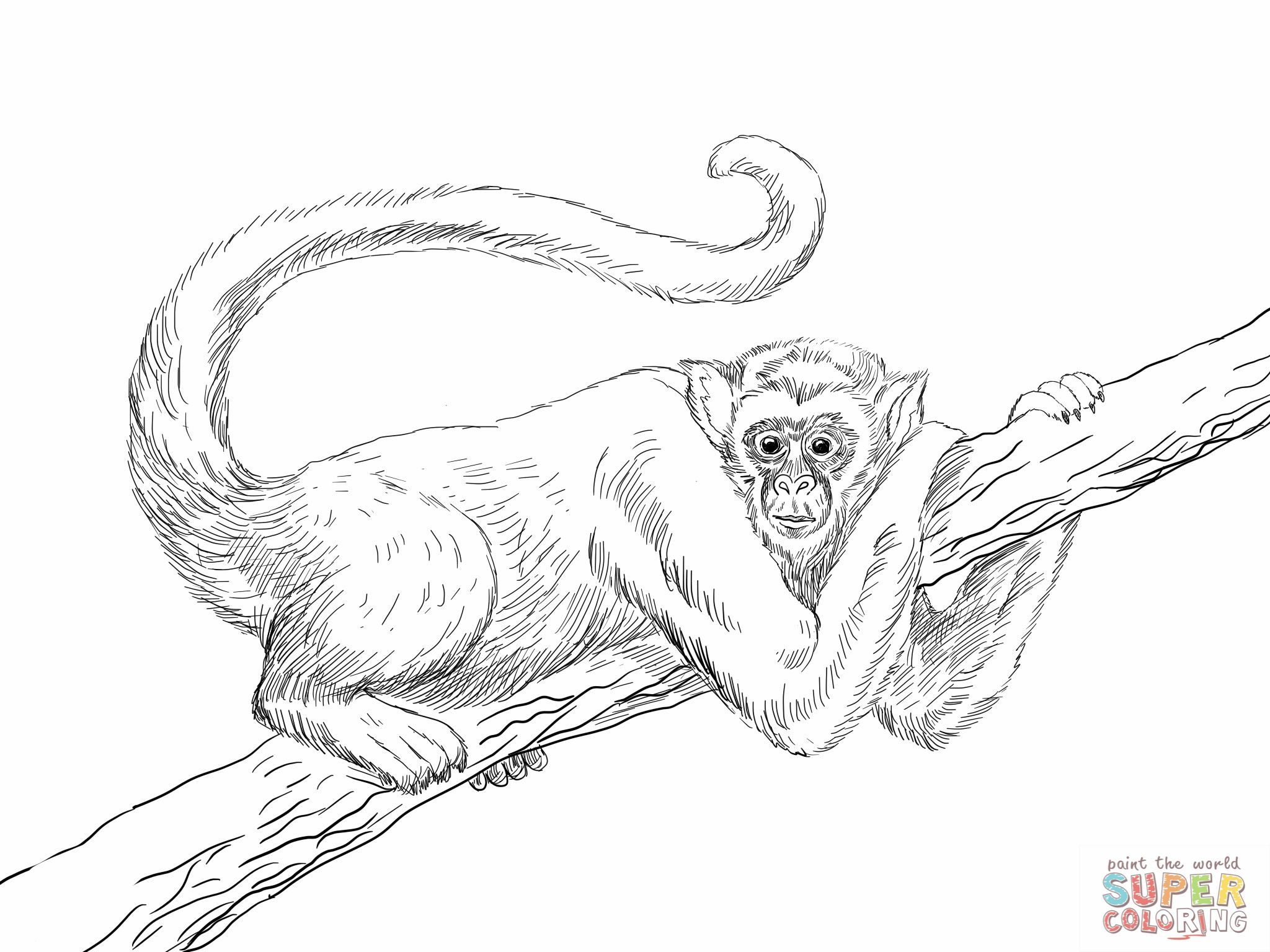 hanging spider monkey coloring page super | 動物 | Pinterest | Dibujo