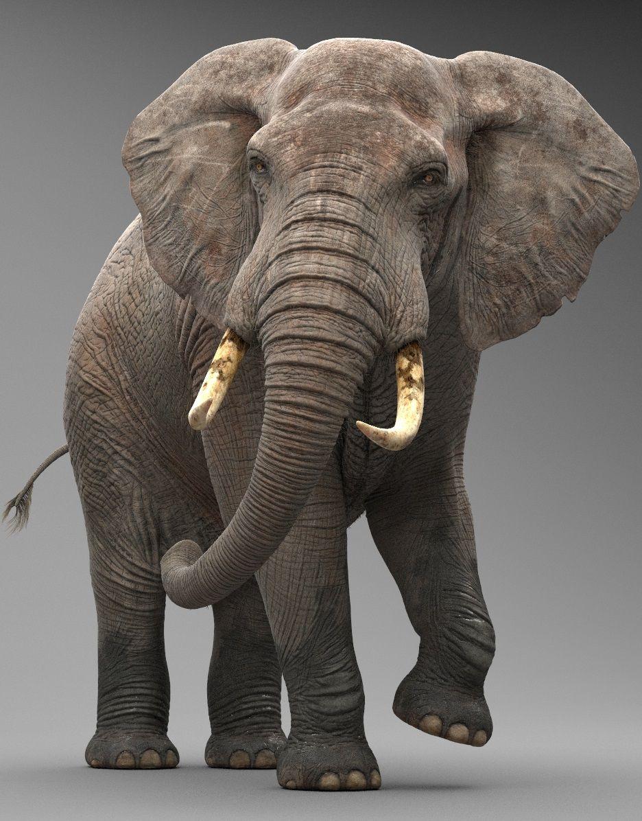 Elephant 3d Model By Missset Elephant Rigged Africa Heavy Mammal Animal Big Tusk Safari Vray Rig Max 3d Model Wed Design De Elephant Elephant Drawing 3d Model