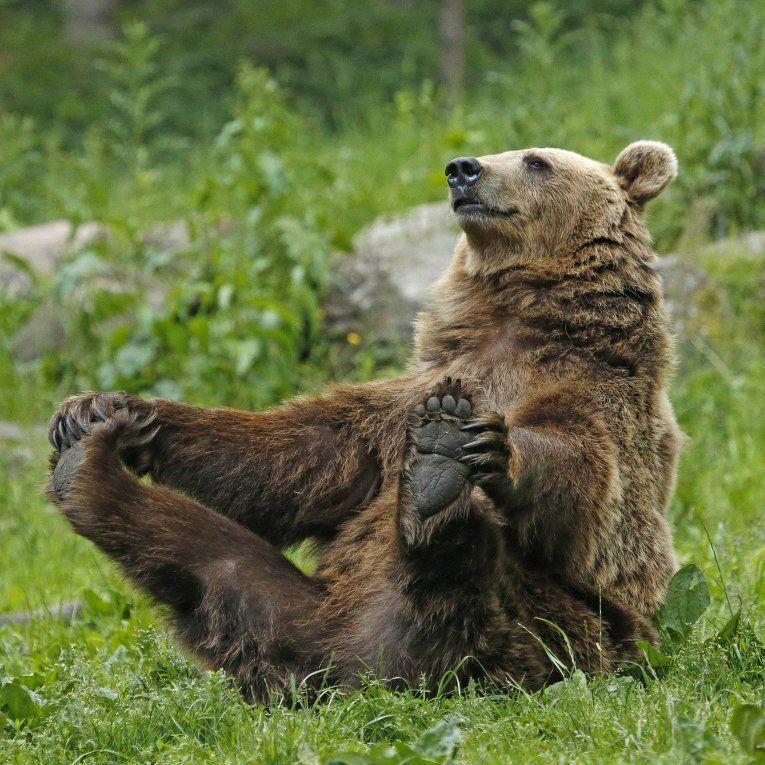 Картинки про медвежат смешные