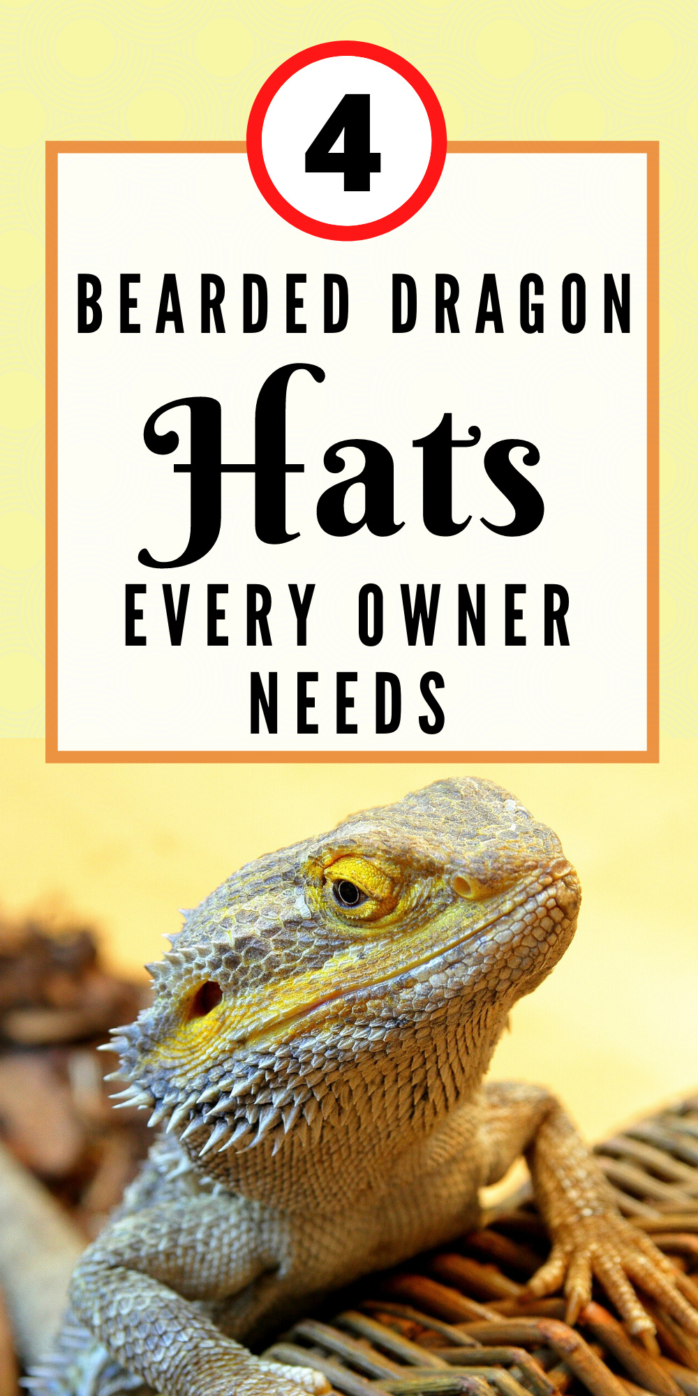 4 Bearded Dragon Hat Every Owner Will Need In 2020 Dragon Hats Bearded Dragon Bearded Dragon Cute