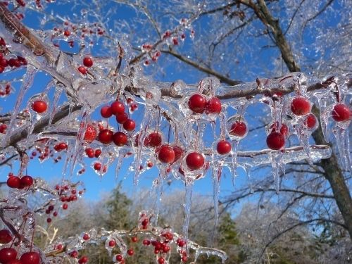 The Beauty Of Ice Storms