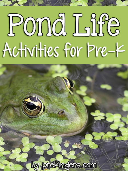 Pond life theme pond animals preschool themes and theme for Turtle fish games