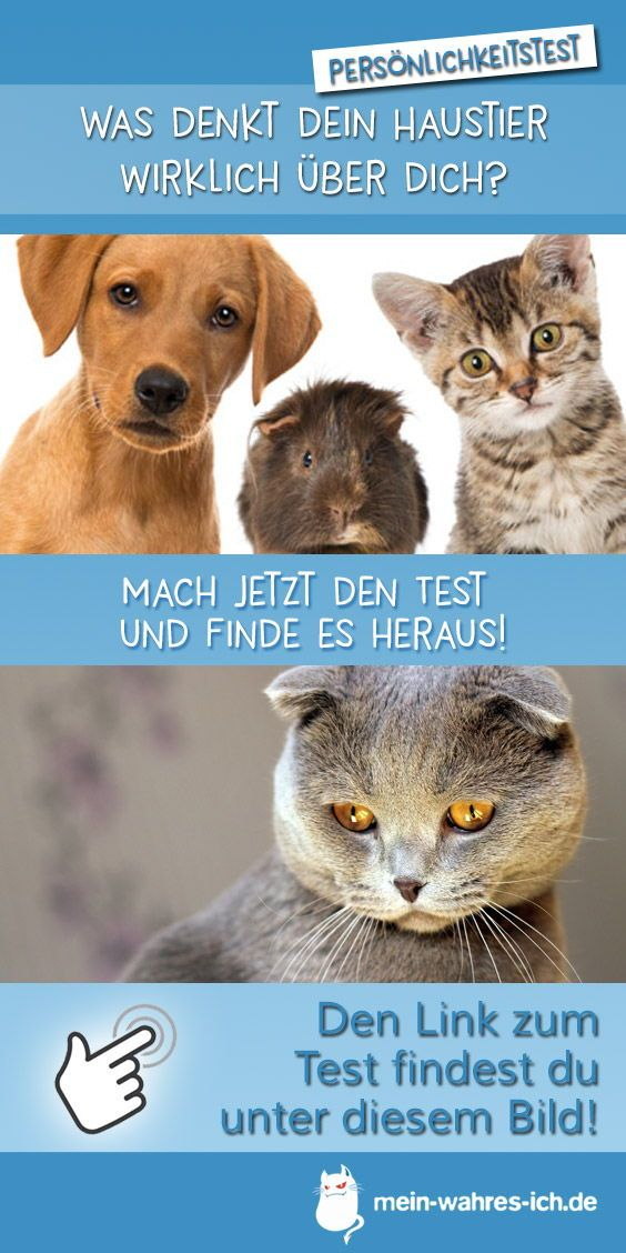 Teste Dich Haustier