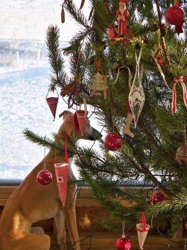 Huge Christmas Card.My Whippet Cricket And Our Huge Christmas Tree Christmas Card