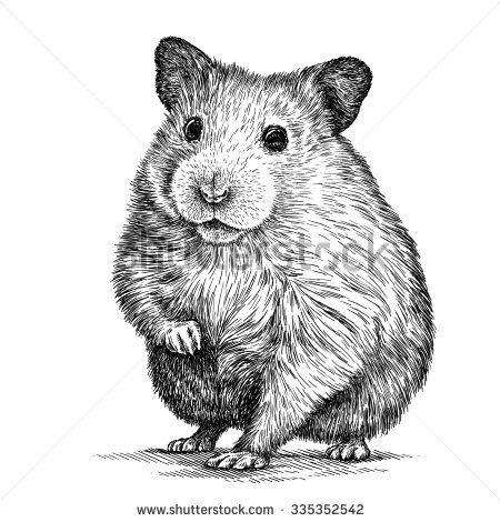 engrave hamster illustration | Drawings en 2018 | Pinterest ...