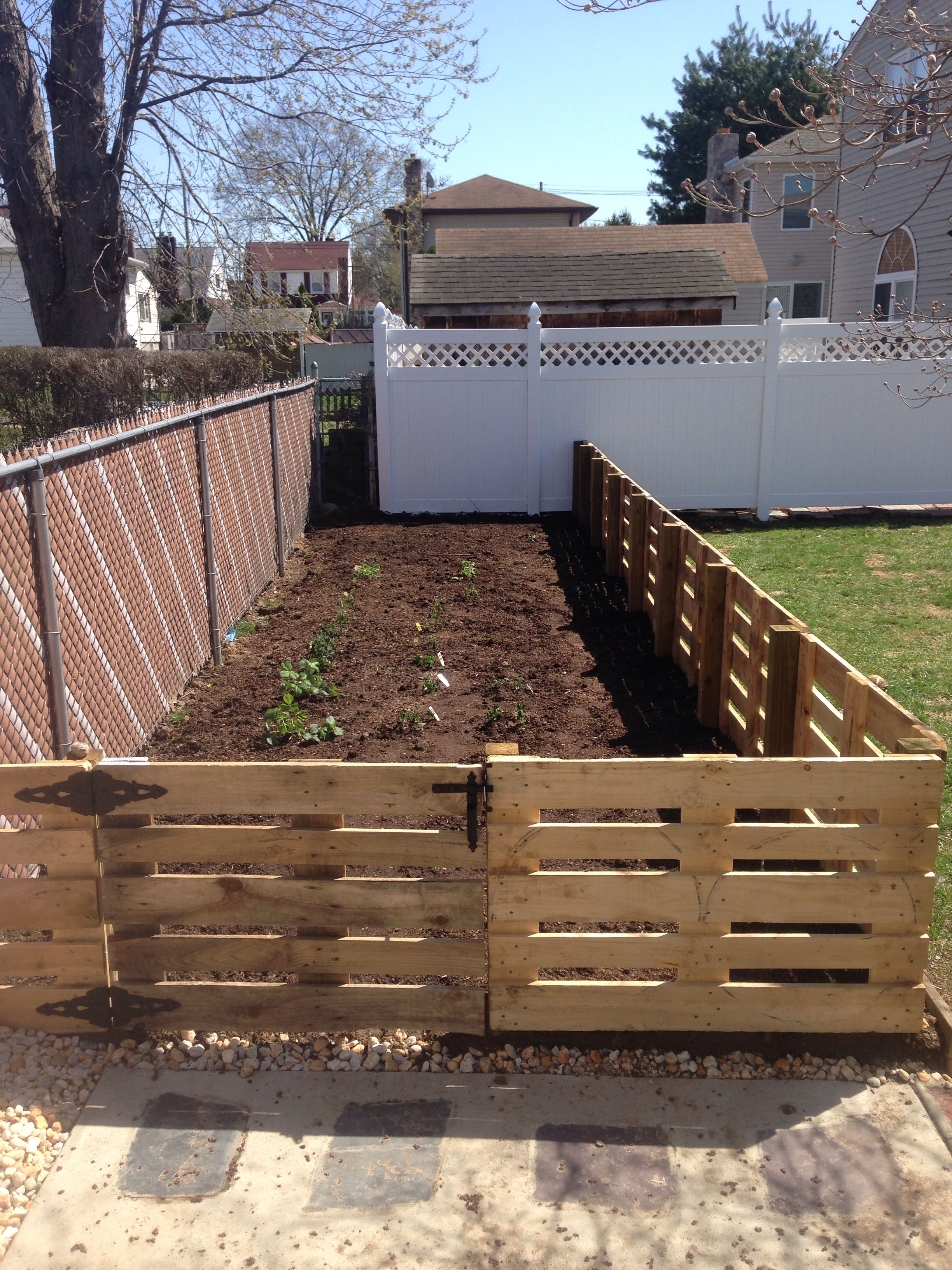Pallet fencea great inexpensive way to fence in garden and it