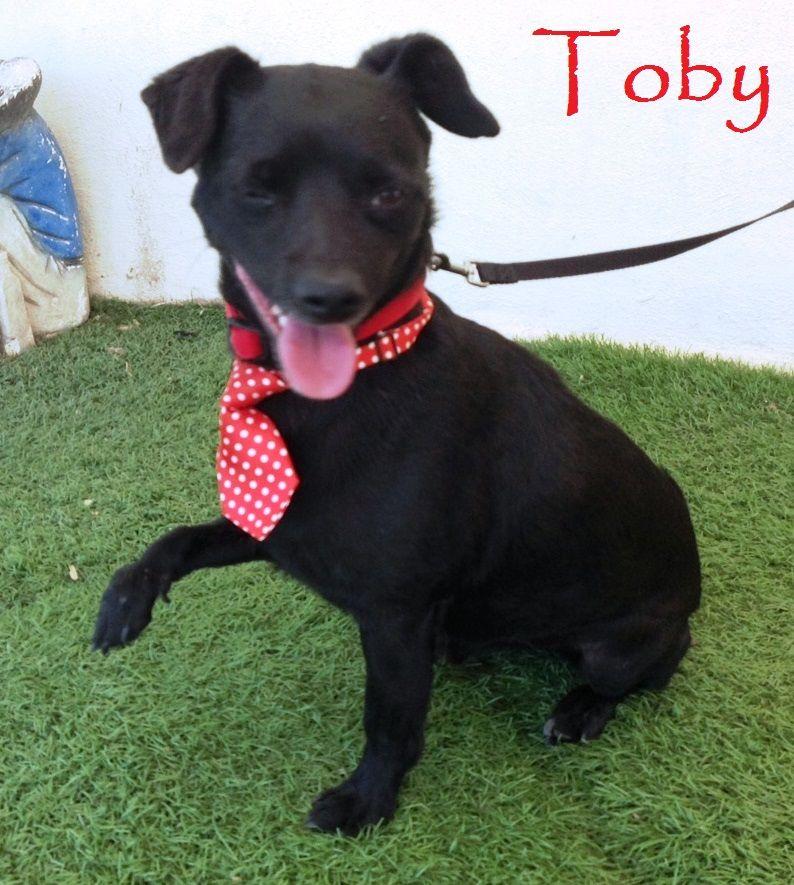dog for Adoption in San Diego, CA. ADN396007 on