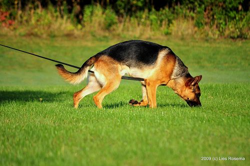 So You Ve Got A Sniffer How To Teach A Dog To Track Dogs Dog