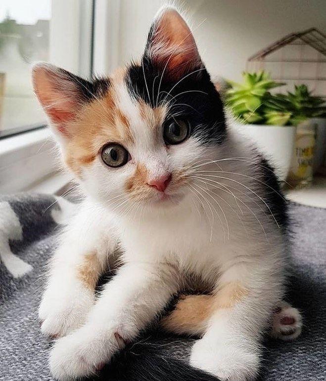 So cute make people feel happy Cute cats, Kittens