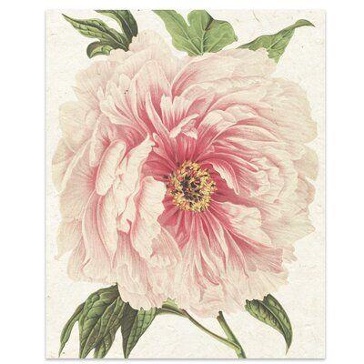 Charlton Home Flower 13 Graphic Art Print On Paper Size 14 H X 11 W X 0 01 D Flower Prints Art Peony Art Botanical Prints