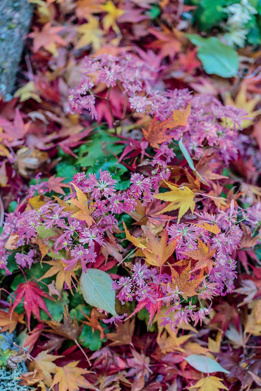 Fleurs Que Faire Au Mois D Octobre Fleurs Jardinage Jardins