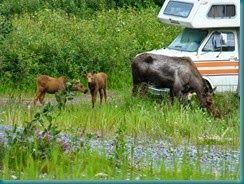 Wrangell- St. Elias National Park