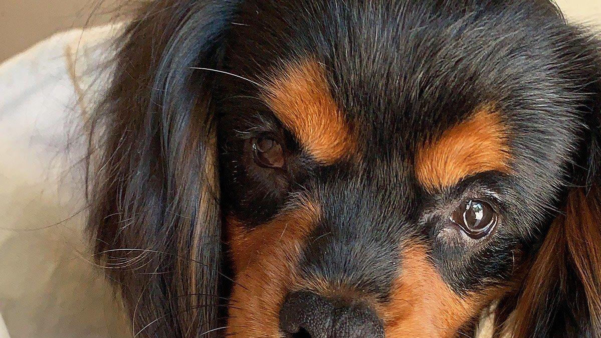 ズバリお答え にしまりちゃんのペット相談 目の見えない保護犬を引き取りたい 私が預かって彼は幸せになってくれるのでしょうか ペット 犬 保護