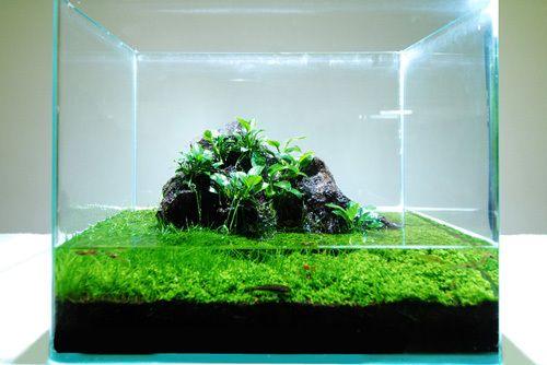 Wabi-Kusa: Transforming Balls of Plants into Aquatic Art ...
