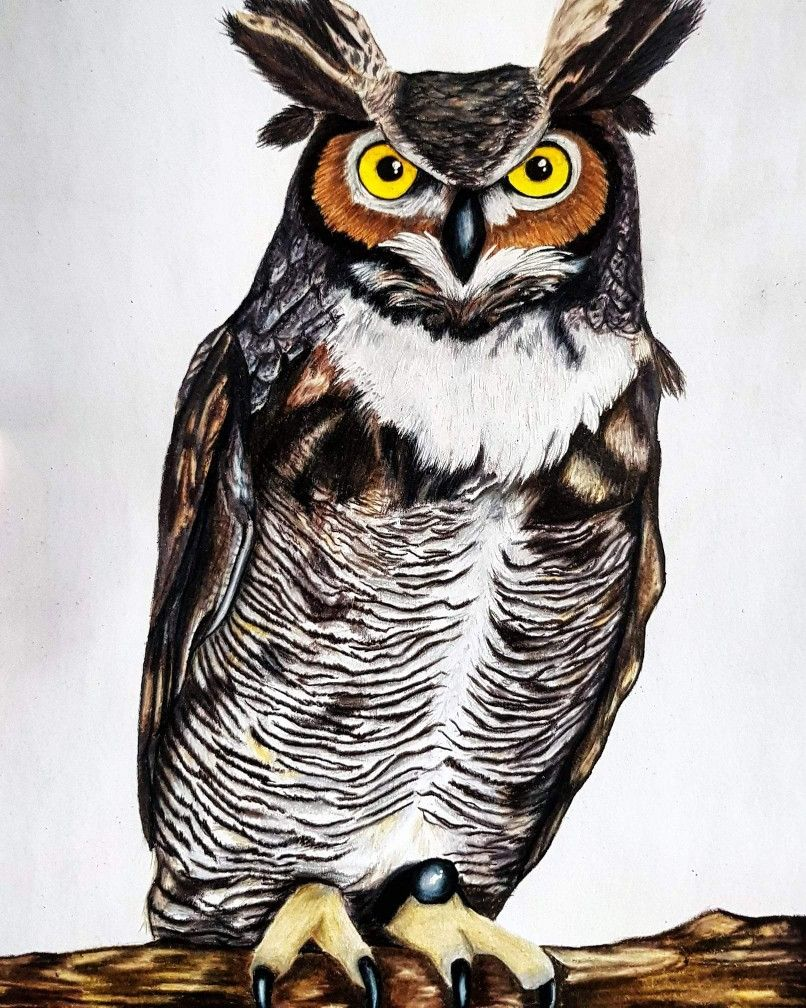 - Great Horned Owl Drawing In Prismacolour Pencils On 300gsm Paper