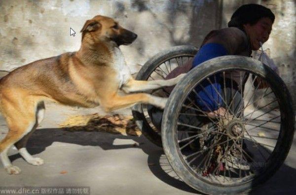 Cadela e seu tutor vencem limitações juntos na China