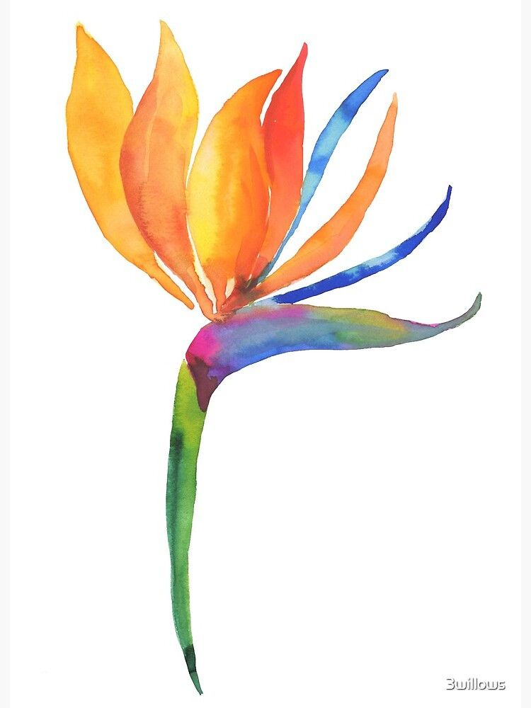 Bird Of Paradise Flower Art Board Print By 3willows In 2020 Birds Of Paradise Flower Watercolor Flowers Paintings Palm Trees Painting