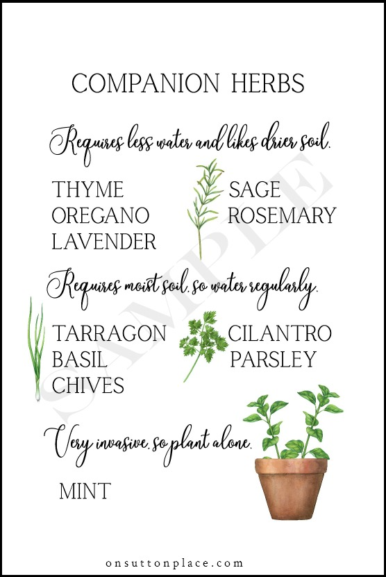 5 Tips for Growing Herbs in Containers is part of Small herb gardens, Growing herbs, Herb containers, Herb garden, Herbs, Growing herbs indoors - 5 simple tips for successfully growing herbs in containers  Includes a list of herbs that can be planted together & ways to use herbs in your everyday life