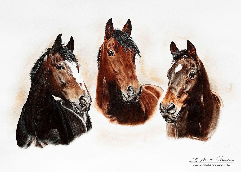Horseportraits by AtelierArends.deviantart.com on @DeviantArt