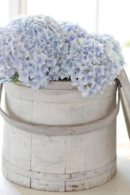 Beautiful pale blue hydrangeas in an antique French wooden pail.... ᘡղbᘠ