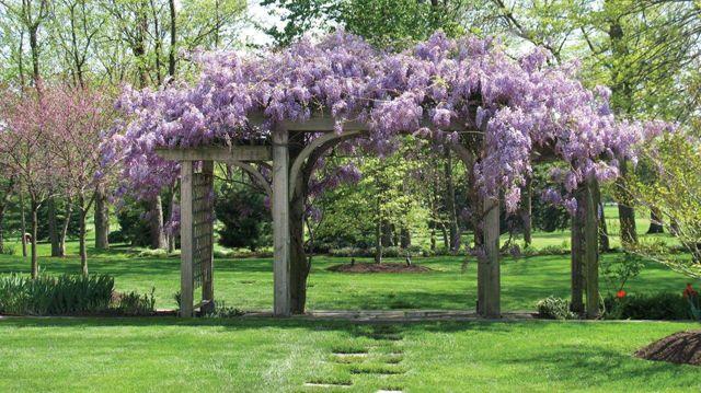 12 Exemples D Am Nagement Jardin Avec Des Glycines Recherche Et Pergolas