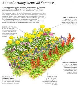 Annual Cut Flower Garden Layout plants and gardening