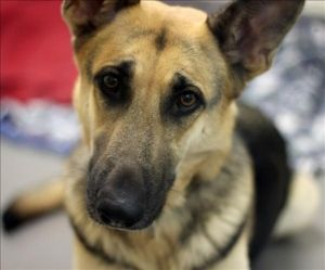 SPCA of Texas onto Dogs for Adoption meet Tinkerbell