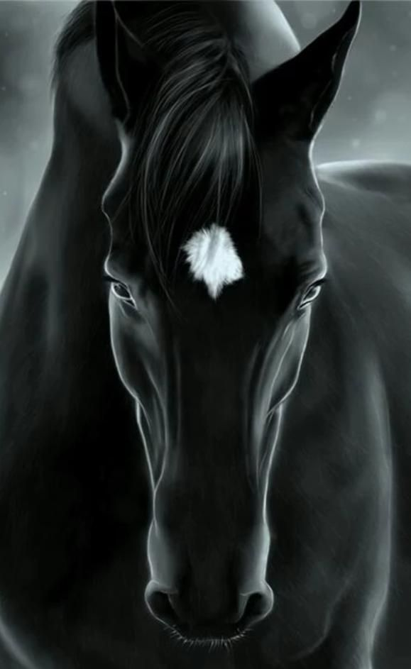Hd Wallpaper Hub On Twitter Horses Horse Wallpaper Horse Pictures Black and white horse wallpaper hd
