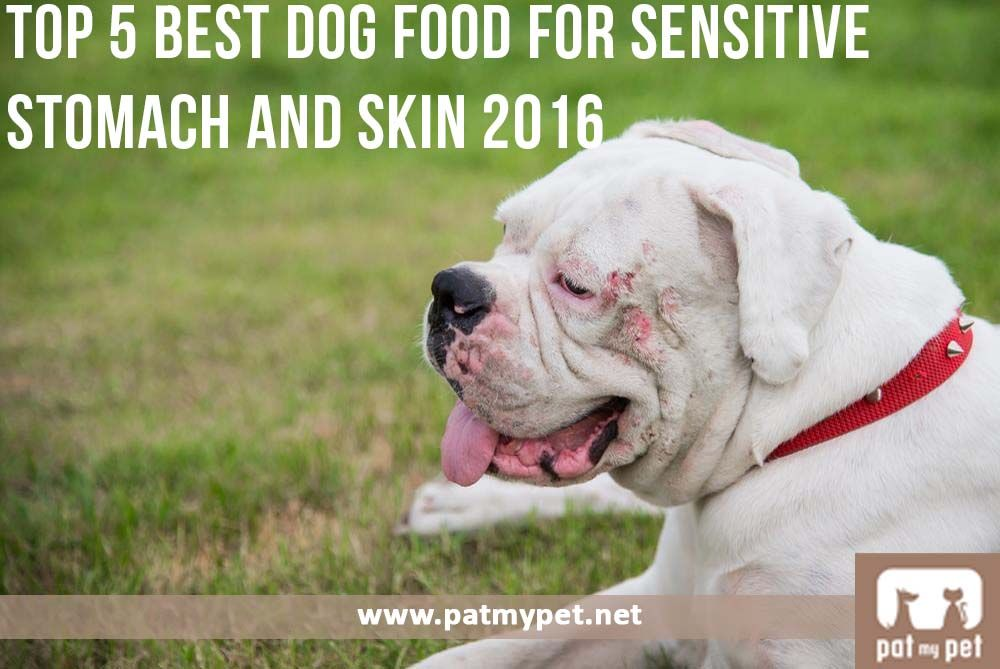 Top 5 Best Dog Food For Sensitive Stomach And Skin 2016 Aims Towards