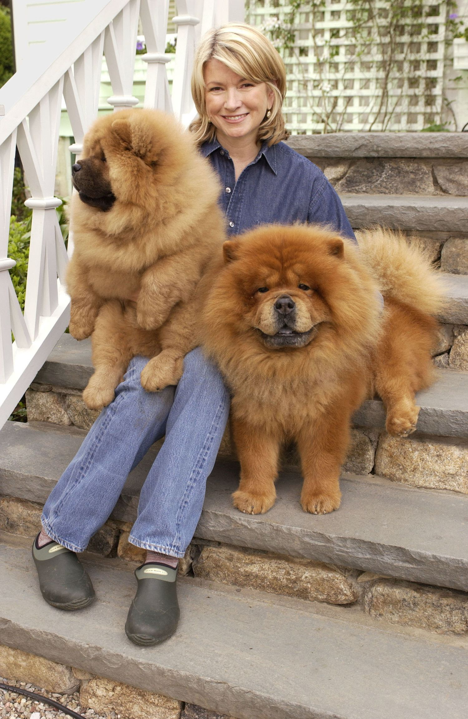 This Is Chin Chin And Paw Paw Together Chow Chows Are An Ancient
