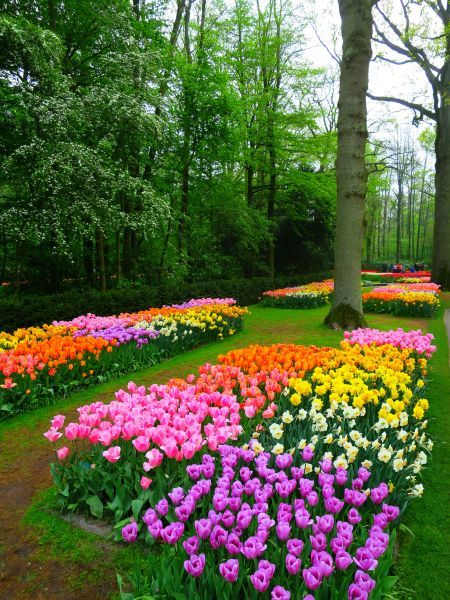 Keukenhof Gardens Netherlands Beautiful Gardens Dream Garden