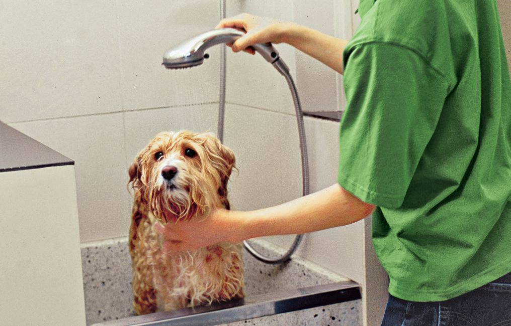 How To Plan A Dog Cleaning Station Dog Cleaning Dog Washing